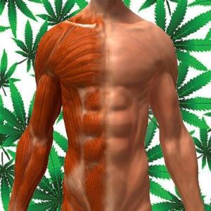marijuana-muscle